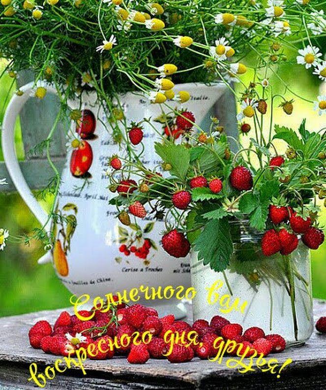 открытки с летним добрым утром с природой уточняют, что пришли