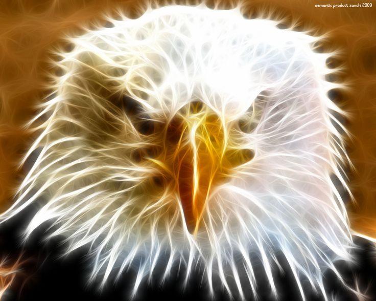 Top Bald Eagle Wallpaper Desktop Wallpapers Eagle Wallpaper Bald Eagle Wallpaper Animal Wallpaper Beautiful swimming pool eagle wallpaper