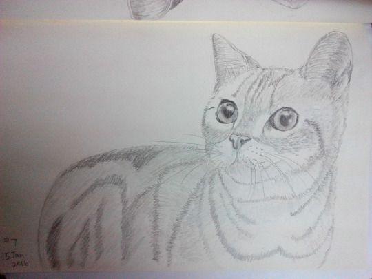 Cat sketching practice #007