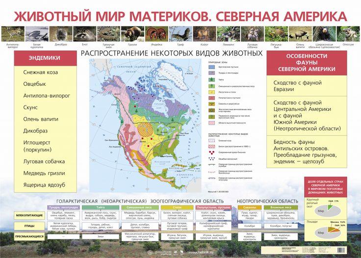Животный мир материков.Северная Америка.