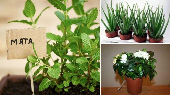 Podle starých učení Feng Shui se prý dá předpokládat, že některé pokojové rostliny umí opravdu vytvářet a rozdávat pozitivní energii. Samozřejmě se tyto tvrzení nedají nijak prokázat a podložit, ale legendy, jimiž jsou rostlinky opředené v sobě ukrývají milý nádech, který nikoho nemůže urazit. Dnes se s Vámi podělíme o …