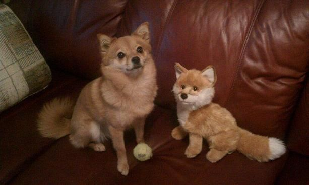 Doppleganger dogs!: Picture, Doppelganger Pets, Pet Dogs, Doppelgang Pet
