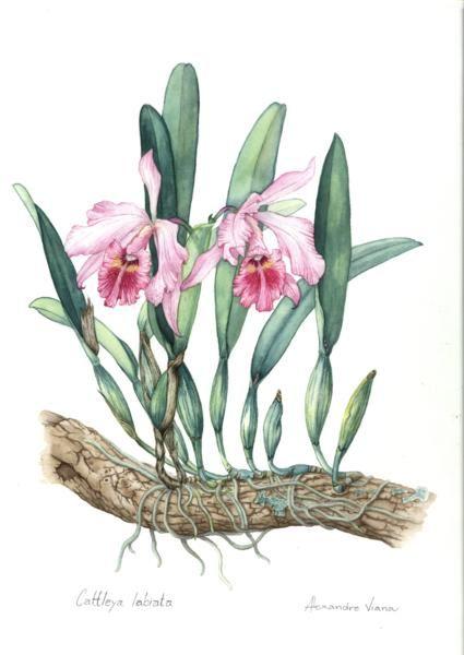 .: Botanical Beautiful, Botanical Illustrations, Flower, Aquarela Botanica, Cura Planta