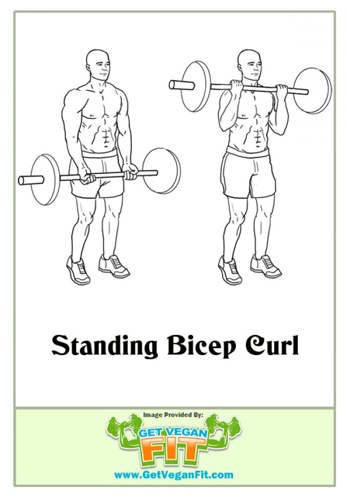 Standing Bicep Curl Arm Exercise Illustration