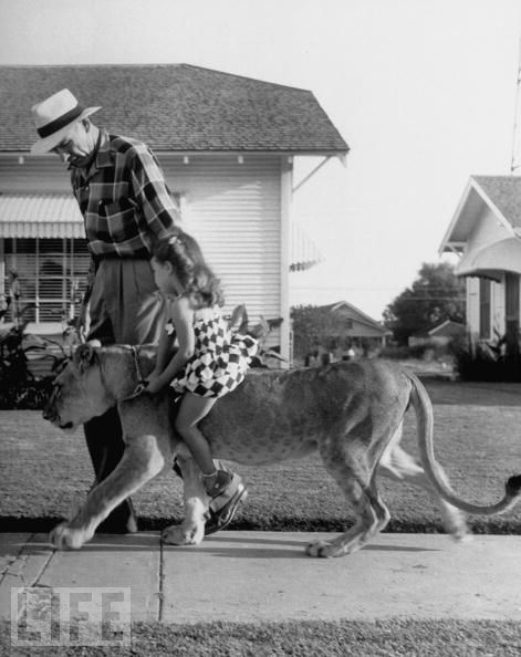 From Craziest Exotic Pets, 1955: Old Age, Living Rooms, Pet Lion, Exotic Pet, Families Pet, Animal Humor, Dreams Pet, Texas, White Photos
