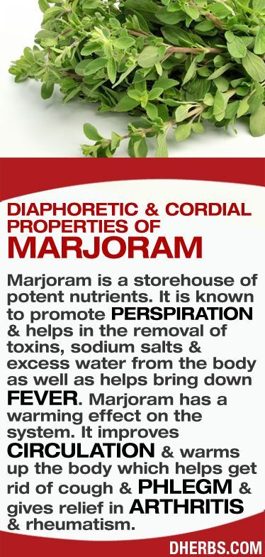 Marjoram is a storehouse of potent nutrients. It is known to promote perspiration & helps in the removal of toxins, sodium salts & excess water from the body as well as helps bring down fever. Marjoram has a warming effect on the system. It improves circulation & warms up the body which helps get rid of cough & phlegm & gives relief in arthritis & rheumatism. #dherbs #healthtips