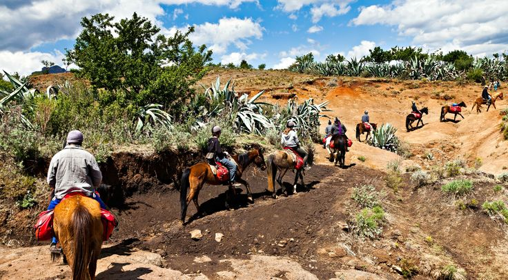 #59 of the #365reasonstovisitAfrica - Not only can you go on long vast safaris in 4x4 vehicles, but you can also go on horseback safaris! See here: http://ow.ly/4mSYR3