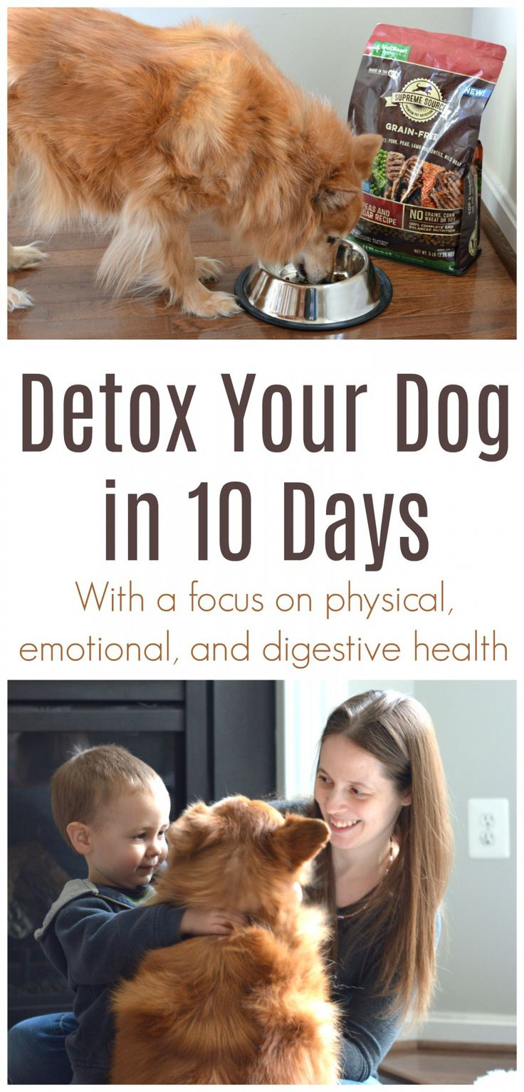Detoxing your dog focusing on their digestive, physical
