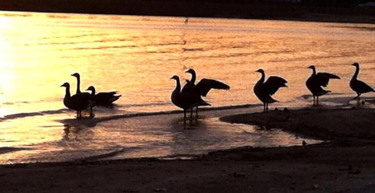 Lake eufaula at sunset lake eufaula animals