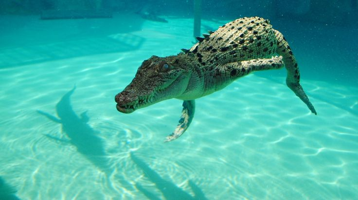 Seven Things to do in Darwin, Australia