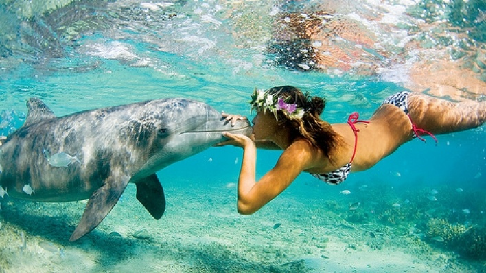 swimming with dolphins<3 Must do this