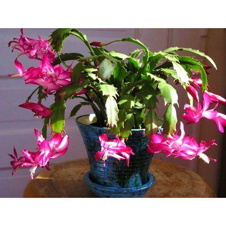 25 best pet safe house plants images on pinterest indoor house plants houseplants and indoor. Black Bedroom Furniture Sets. Home Design Ideas