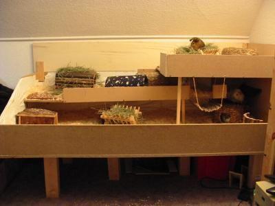 die besten 17 ideen zu meerschweinchenk fig auf pinterest meerschweinchen k fig meerschwein. Black Bedroom Furniture Sets. Home Design Ideas