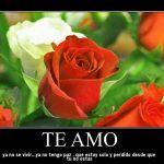 Rosas rojas con frases de amor para alguien que amas