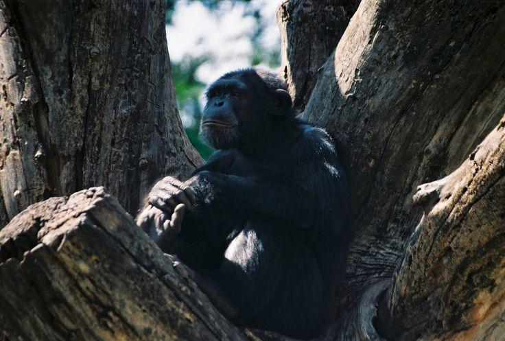 Andyz Duniya..: MYSORE - Cultural capital of South Karnataka #Mysore #Zoo #Travel #Photography #India