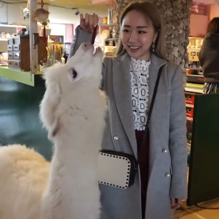Alpaca Cafe | Taipei, Tawian