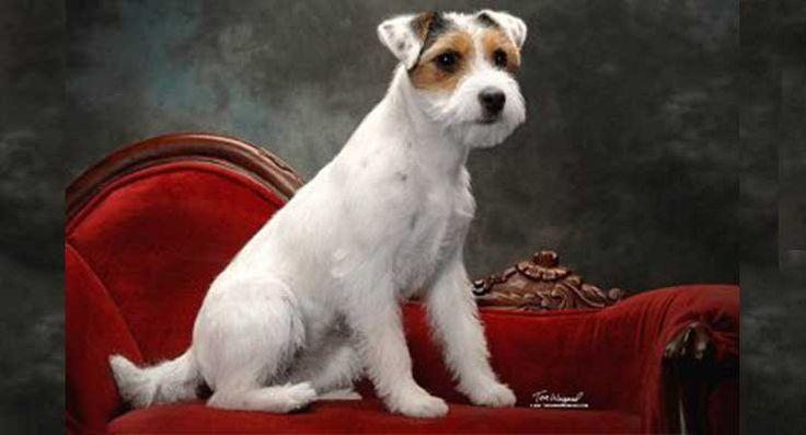 26 best Razas de perros pequeños images on Pinterest ...