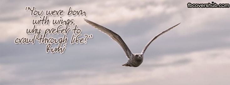 You were Born with Wings Rumi Fb Cover