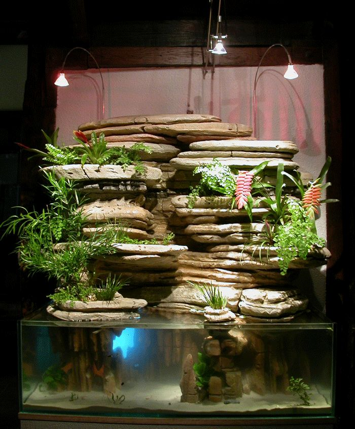 17 best ideas about indoor vertical gardens on pinterest for Carpe koi aquarium 300 litres