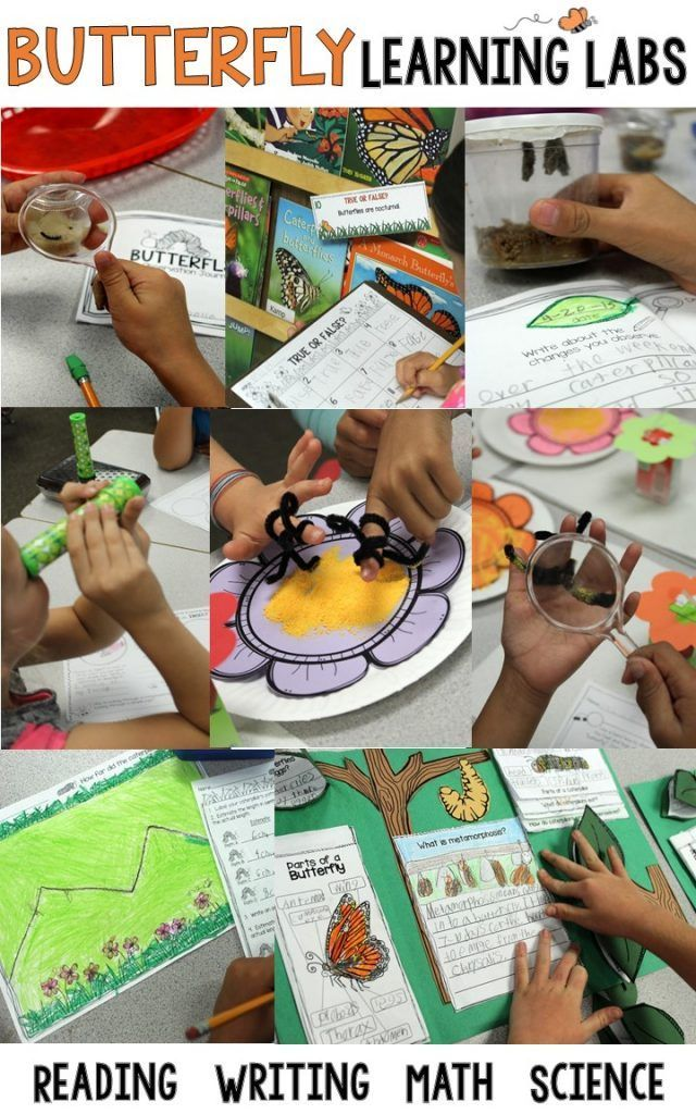 See how we used butterfly learning labs to integrate literacy, writing, and math into our science experiments during a life cycle of butterflies unit with our 1st, 2nd, and 3rd grade students.