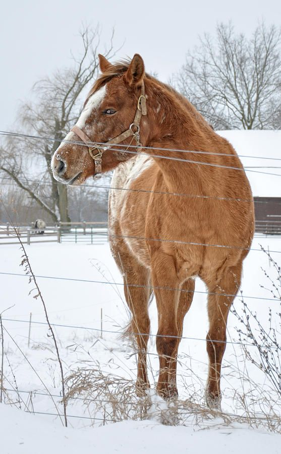 Image result for paintings of a horse in a snowy field