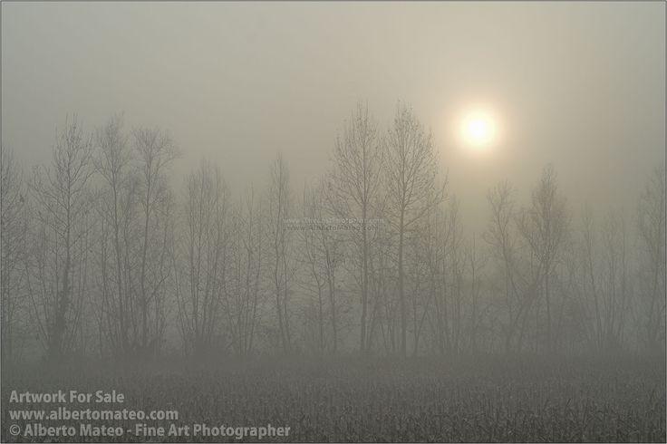 Corn fields in winter, fog, Brugine, Padova, Italy.