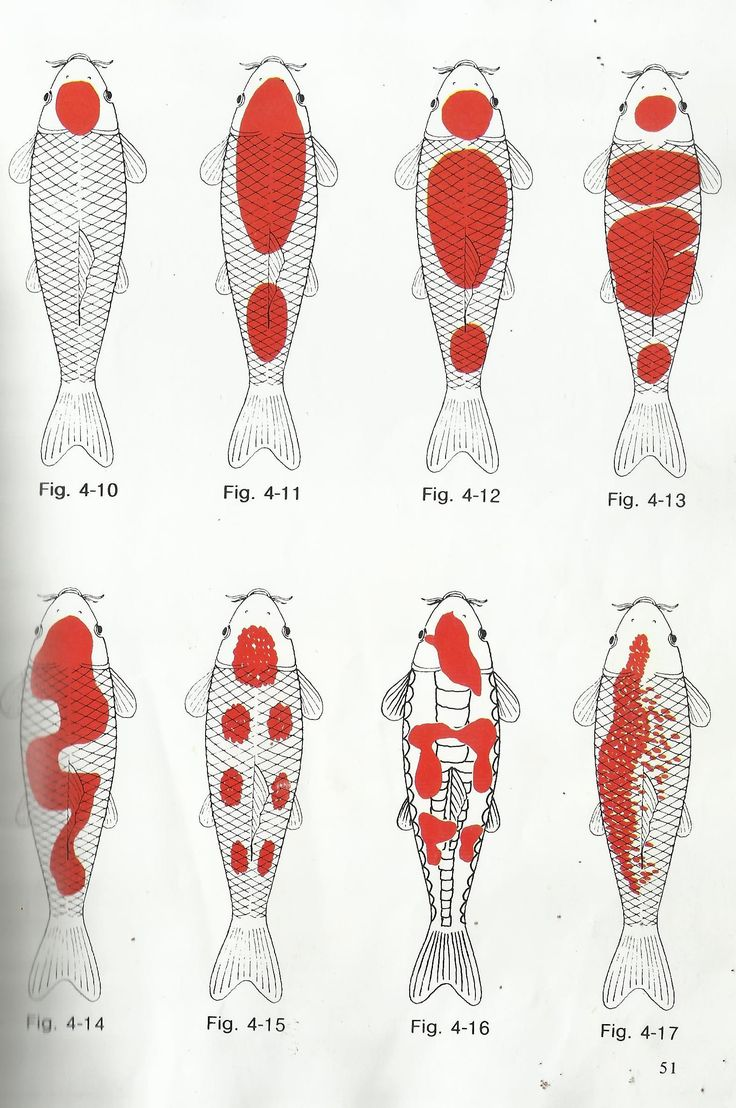 different kohaku koi pattern diagram photos #kohakukoifishdiagram #typesofkohaku #kohakukoifish #koifish
