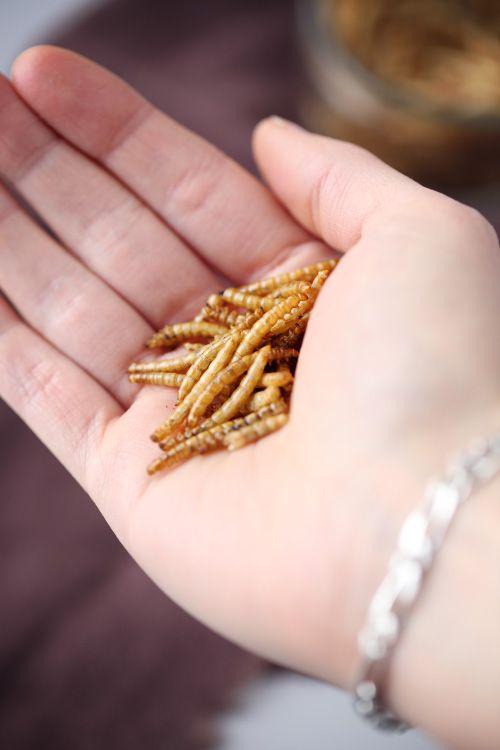 J'ai testé : manger des insectes.