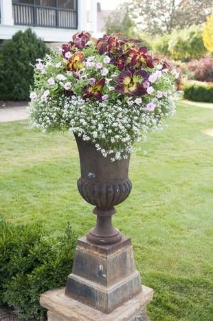 37 best images about urns on pinterest gardens newport beach and outdoor decor - P allen smith container gardens ...