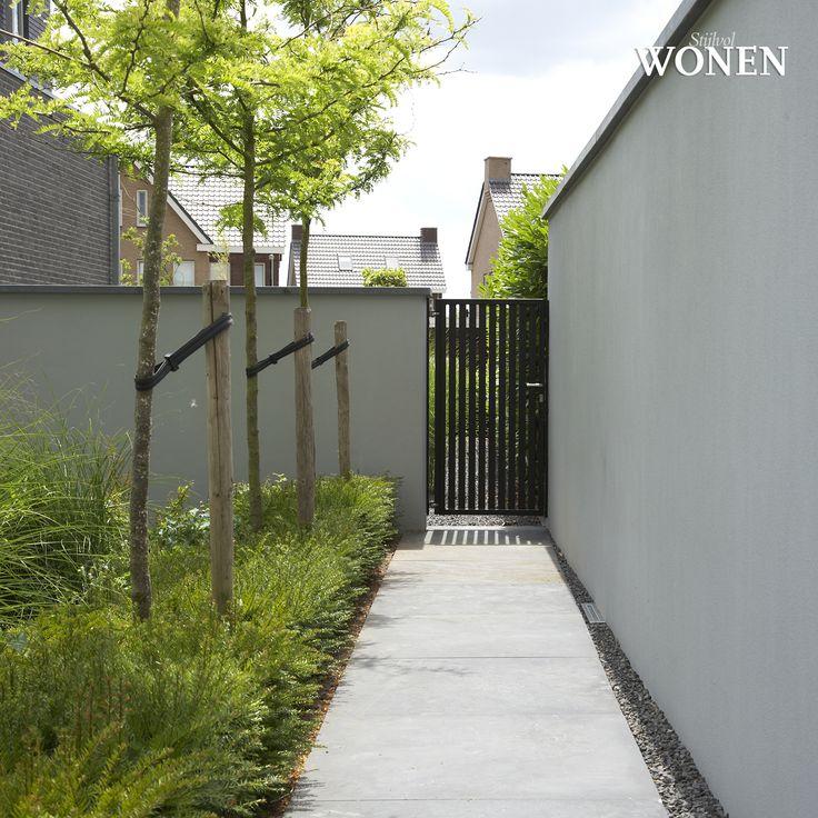 Gleditsia's met daaronder siergrassen gecombineerd met vaste planten en ernaast een strak beton pad.