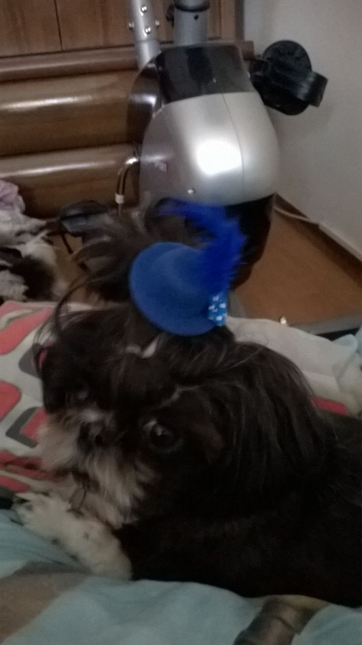 Dama w kapelusiku, hat