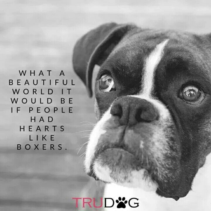 The most Correct thing i have read All Wk so far #BoxerMom #BoxerDogLife #ILoveMyBoxers ❤