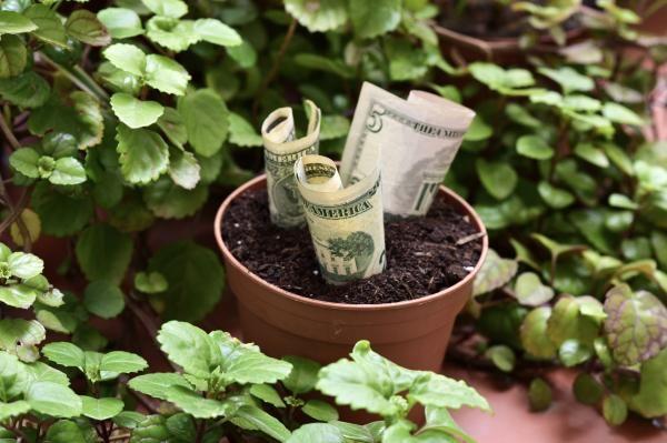 Plantas para atraer dinero