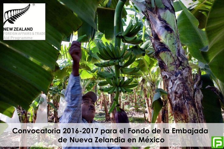 La Embajada de Nueva Zelanda en México, invita a organizaciones no gubernamentales y grupos comunitarios a presentar proyectos al Fondo 2016 - 2017.