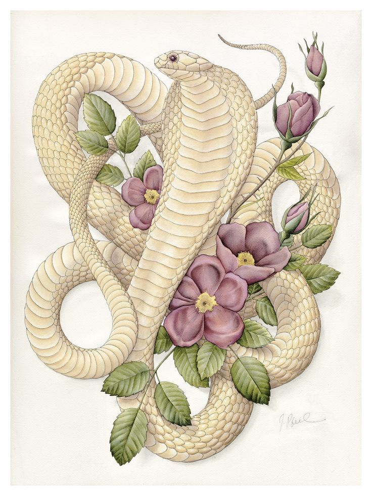 картинки змеи с цветами направились, периодически останавливаясь