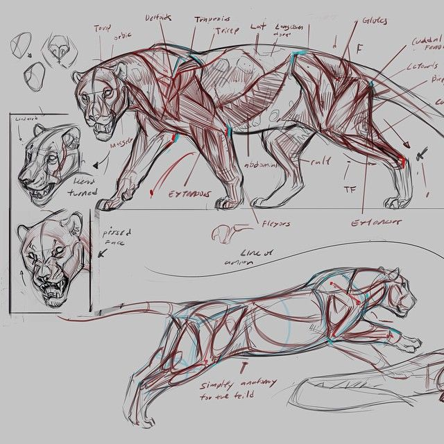 Wk 6 predator anatomy demo at CDA full image and other demo images on Facebook…