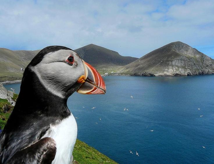 by Gina Prior (Seabird Ranger on St Kilda - Scotland)