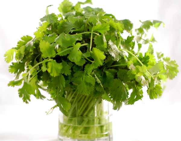 To regrow cilantro just take the scraps and put the stems in a glass of water. When they grow and become longer, transplant them to a pot that has soil.