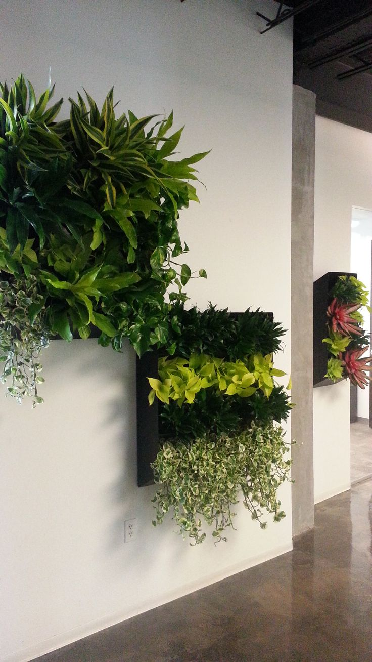 """Plant Portraits"" Pothos Enjoy, Dracaena Compacta, Dracaena Green Stripes, Neon Pothos, Neo Bromeliads..."