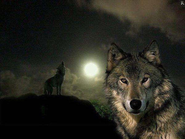 Удачная на днях была охота, Легко нашел я логово волков. Волчицу сразу пристрелил я дробью, Загрыз мой пес, двоих ее щенков. Уж хвастался жене своей добычей, Как вдалеке раздался волчий вой, Но в этот раз какой-то необычный. Он был пропитан, горем и тоской. А утром следующего дня, Хоть я и сплю довольно крепко, У дома грохот разбудил меня, Я выбежал в чем был за дверку. Картина дикая моим глазам предстала: У дома моего, стоял огромный волк. Пес на цепи, и цепь не доставала, Да и наверное, он…