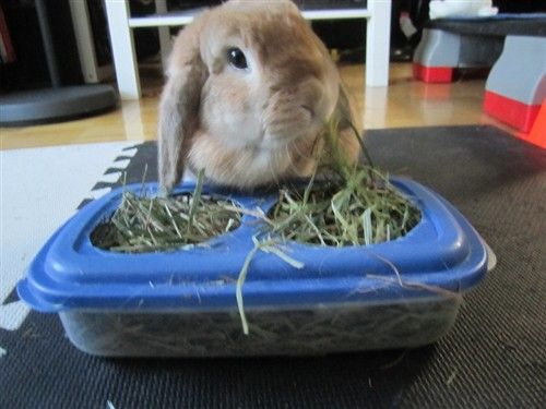 cheap clean hay feeder - BinkyBunny.com - House Rabbit Information Forum - BinkyBunny.com - BINKYBUNNY FORUMS - DIET & CARE