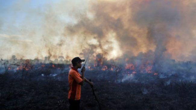 Perusahaan Korea bakar hutan untuk lahan kelapa sawit