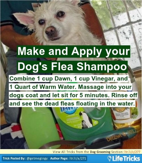 Make and Apply your Dog's Flea Shampoo
