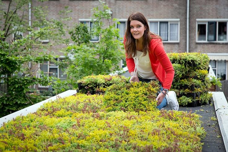 Tuinieren op hoog niveau. Mobiroof daksysteem. Stek 06, 2012