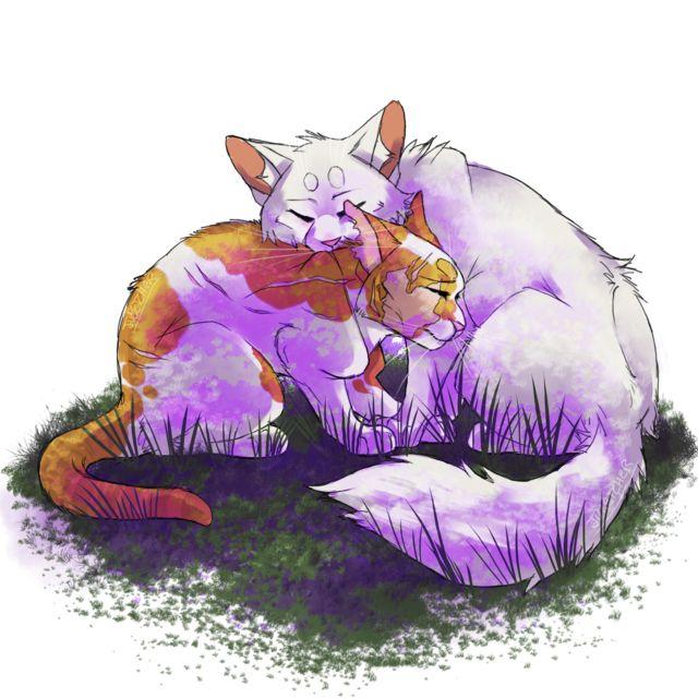 1797 Best Warriors Cats Images On Pinterest