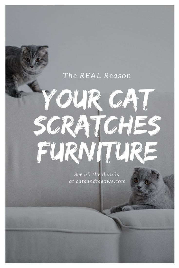 The REAL Reason Your Cat Scratches Furniture