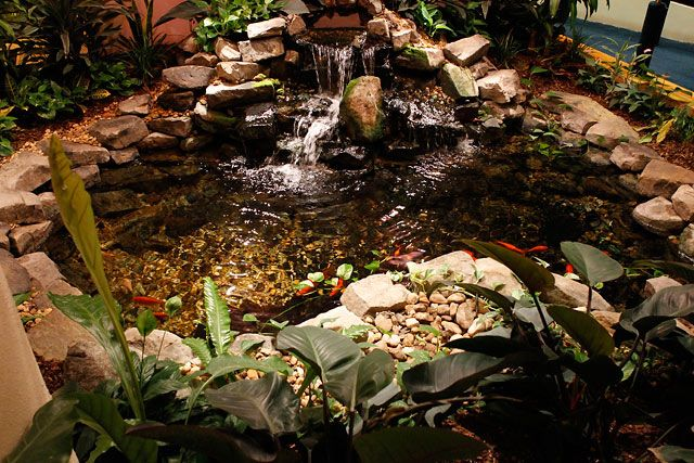 1000 Ideas About Indoor Pond On Pinterest Koi Fish Pond Koi Ponds And Dream Pools