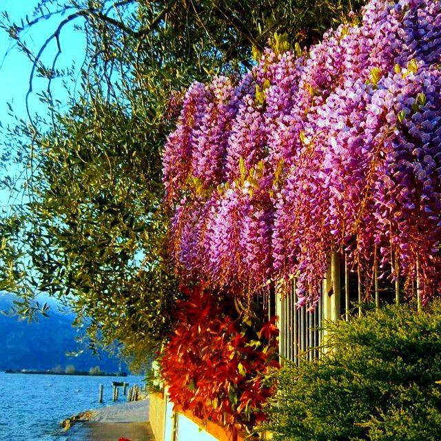 Buona settimana a voi tutti #AmiciDelGarda [foto Diego Consolati] #LagoDiGarda #VisitLagoDiGarda #LakeGarda #VisitLakeGarda