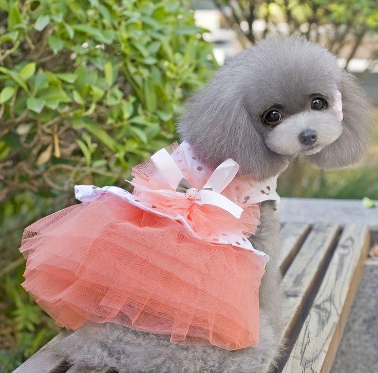 Домашнее животное красивая свадьба платье принцесса платье узор в горошек бишон поморское тедди домашнее животное одежда лето. Милый щенок юбка