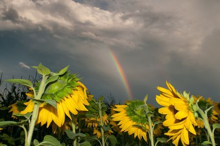 8 Best Rainbow Facts. - Random Facts
